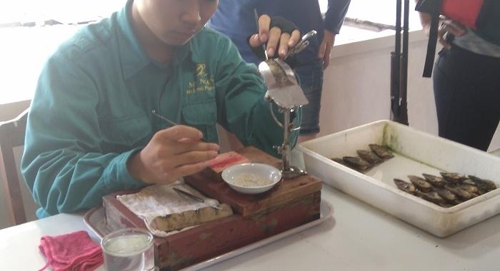 Bai Tu Long Bay_Preparando las perlas