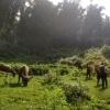 Sapa_pastores y sus búfalos