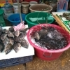 Pescado fresco vivito y coleando
